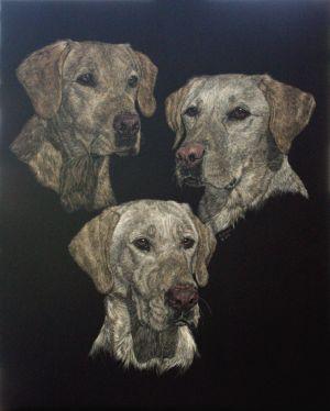 Three of a Kind - Labrador Retriever Scratchboard