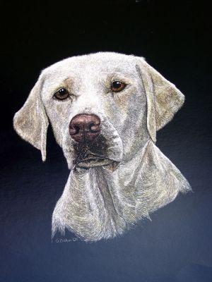 Belle - Labrador Retriever Scratchboard