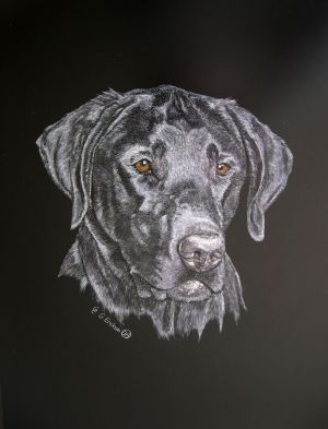 Deuce - Labrador Retriever Scratchboard