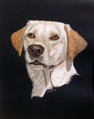 Grace - Labrador Retriever Scratchboard
