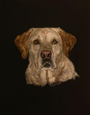 Josie - Labrador Retriever Scratchboard