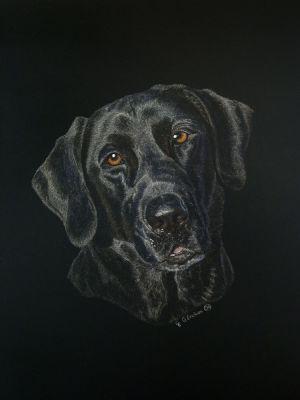 Rip - Labrador Retriever Scratchboard