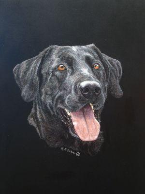Sadie - Labrador Retriever Scratchboard