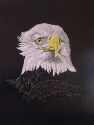 Majestic - Bald Eagle Scratchboard