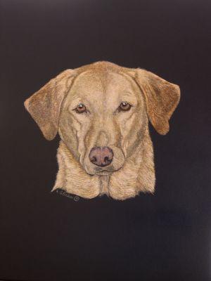 Roxie - Labrador Retriever Scratchboard